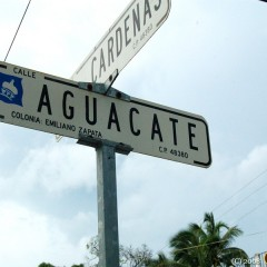 aguacate-st